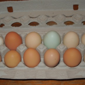 Store Bought Eggs vs. Farm Fresh Eggs